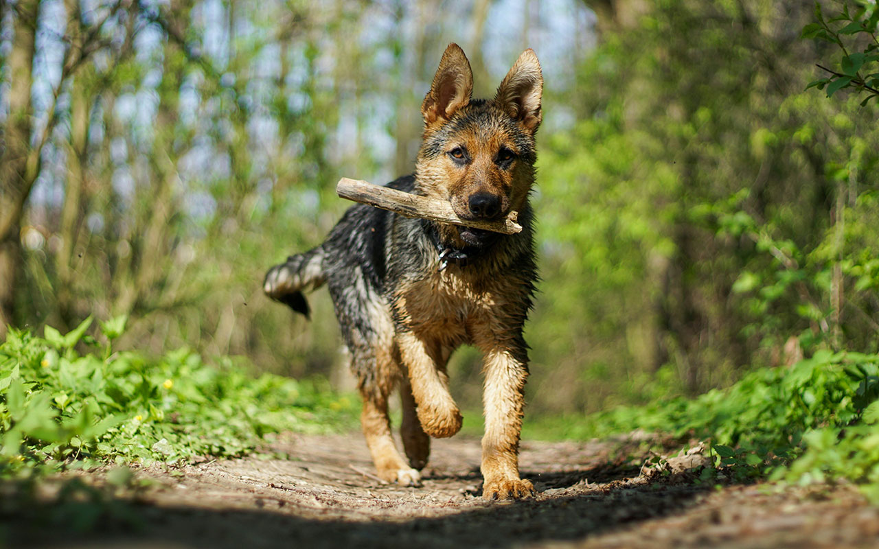 Dog Bite Attack Dog Owner Law and Liability Basics
