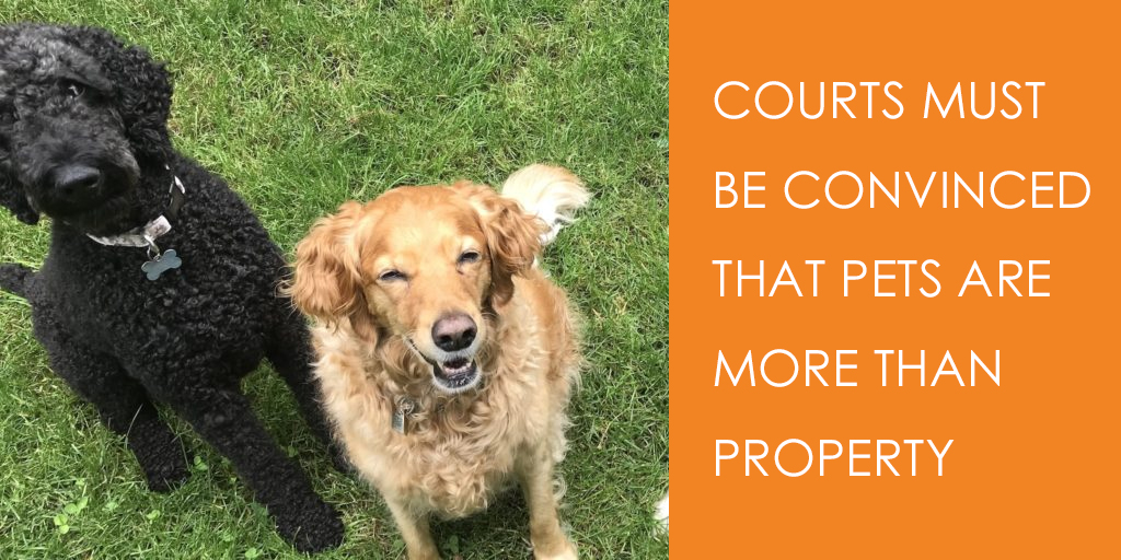 Courts must be convinced that pets are more than property