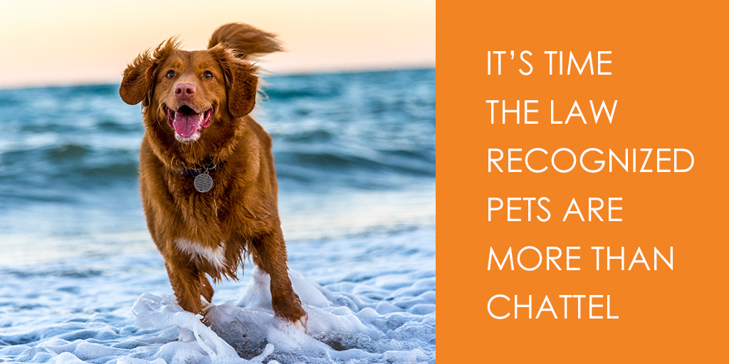 It's time the law recognized pets are more than chattel
