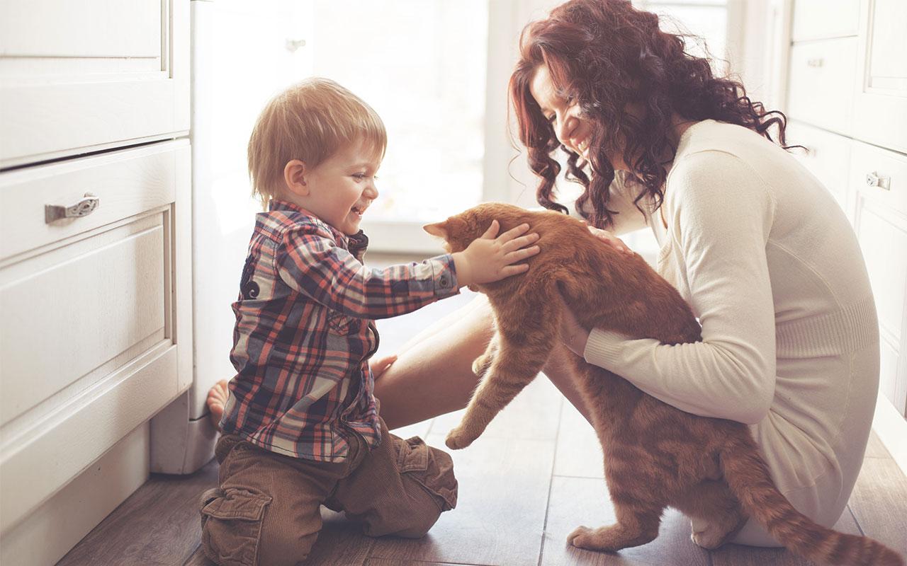 Ontario Law Views Pets as Property